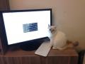 I kočka zvládne práci s terminálem v Linuxu; že by namísto RedHat vznikl RedCat?