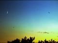 Slobodní vtáci letia pod popelavým svitom Luny (Eduard Boldižár)