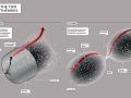 Ktorému modelu vesmíru fandíte vy? Teórií veľkého tresku odeného do monštruóznej inflačnej rozpínavosti alebo skôr holdujete na striedaní veľkého tresku s veľkým krachom v nekonečnom cykle? (Eduard Boldižár)