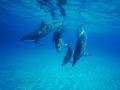3053-dolphin-1024x768